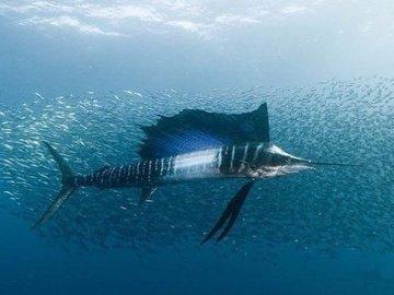 Почему рыбы плавают быстрее подлодки