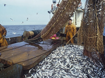 В России наблюдается активный рост потребления рыбы