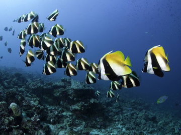 Ищем лидера: кто ведет за собой стаю рыб
