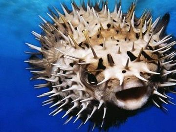 ТОП 10 самых ядовитых в мире рыб