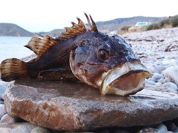 Особенности национальной рыбалки на ерша
