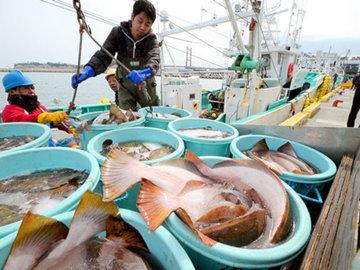Китай ввел запрет на ввоз вьетнамской рыбы