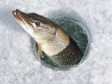 Спасаем рыбу от замора в конце зимы
