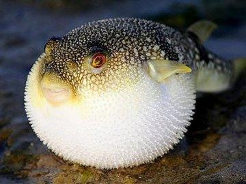 Интересные и неизвестные факты о рыбе
