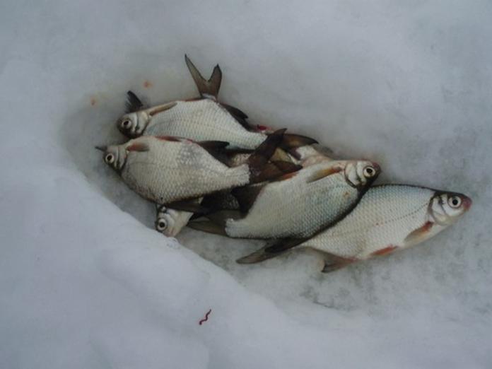 Зимняя рыбалка ловля сопы