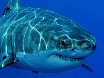 В Австралии местный житель спас серфера от акулы с помощью дрона