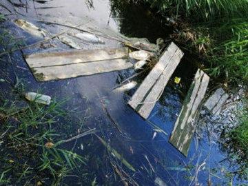 В Волгограде выясняют причины гибели рыбы в пруду в Вишневом пруду