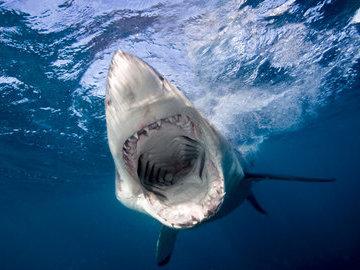 Огромный обитатель морской пучины - гигантская акула