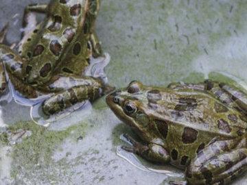 На территорию России не пустили украинских червей и лягушек