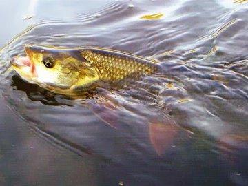 Весенняя рыбалка - рыбьи «маневры»