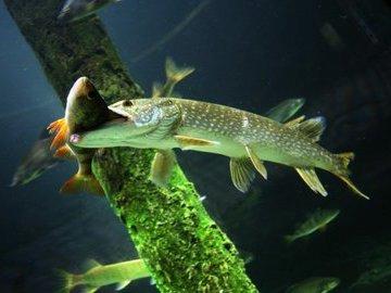 Как заманить рыбу: выбираем цвет приманки