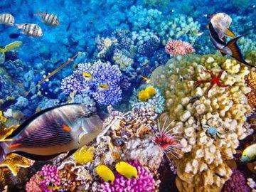 Рыбы любят дом, где родились
