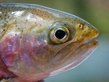 Рыба с радужными полосами