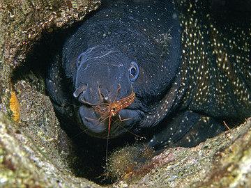 Мурена: морская хищница с выразительной внешностью