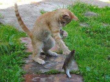 Себе не обязательно, а коту надо доказывать, что ты рыбак