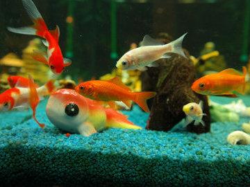 Топ самых необычных рыб в мире