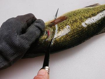 Основы разделки рыбы: филеровка