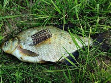 Особенности летней рыбалки на леща
