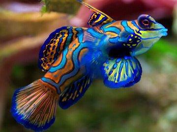 Ихтиологи назвали самую красивую рыбу