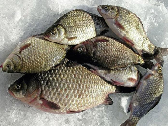 Ловля рыбы в пруду зимой