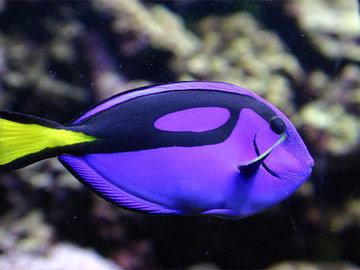 Топ-6 самых красивых морских рыб в мире