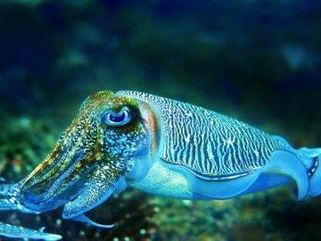 Морская хищница