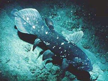История одной «вымершей» рыбы