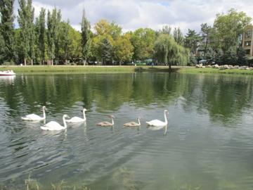 В Гагаринском парке Симферополя от незаконной рыбалки пострадали лебеди