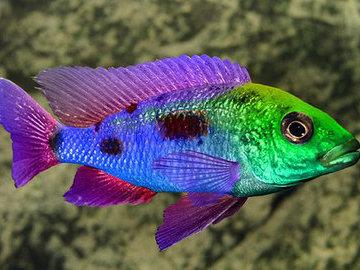 Могут ли рыбы различать цвета?