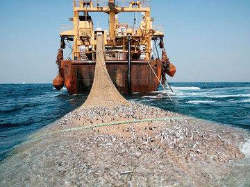 Рыбаки торопятся уничтожить всю рыбу в районах будущих заповедников