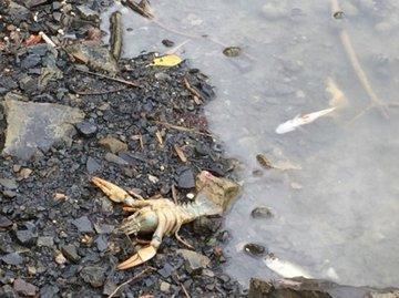 Мусорный полигон погубил всю рыбу в Ялтинском озере