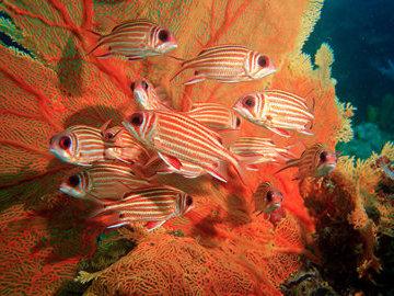 Тайна цветовых окрасок и узоров рифовой рыбы раскрыта