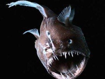 Удивительная рыба со спиннингом на голове. Ласиогнат