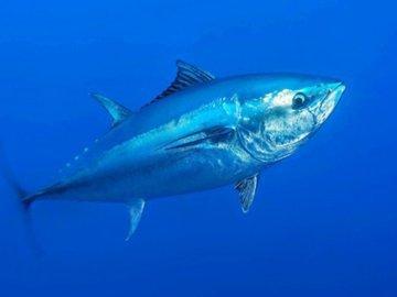 Рыба, балансирующая на грани исчезновения
