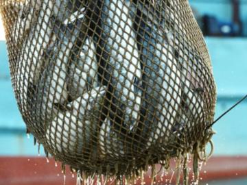 У  браконьеров в Ростовской области изъяли рыбу на 3 млн рублей