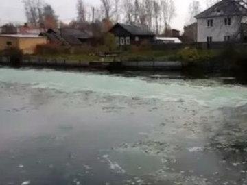 Под Нижним Тагилом в Черноисточинском пруду массово гибнет рыба