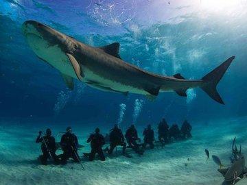 Китовые акулы вытащили город Ослоб из нищеты