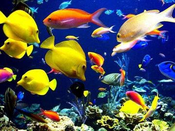 На курортах Египта запретят кормить рыб
