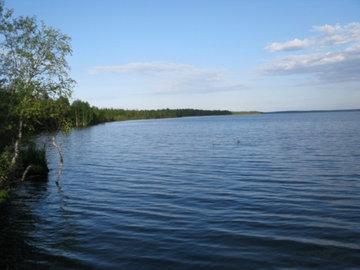 На озере Мураканском обнаружили гибрид пеляди и сига