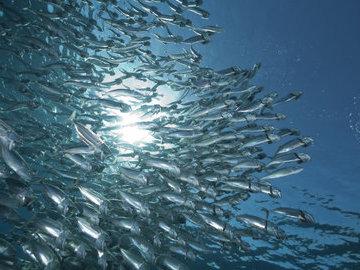 В Арктике обнаружили огромные запасы рыбы
