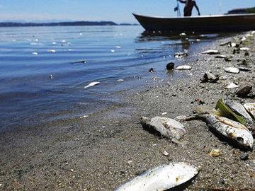 В реках обнаружили мертвую воду