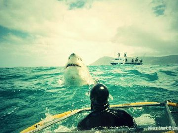 Соревнования по ловле акул ведут к их вымиранию