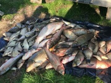 На Кубани браконьеры наловили рыбы на 1 млн рублей
