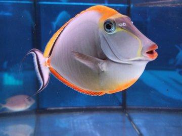 В Крыму выловили рифовую рыбу