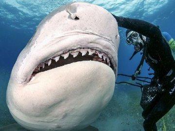 Акула и рыбак подрались из-за рыбы