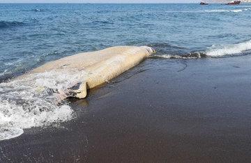 Море подкинуло зоологам новую загадку