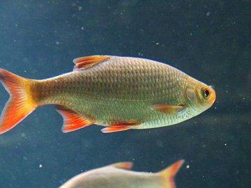 Рыба с оранжевым взглядом