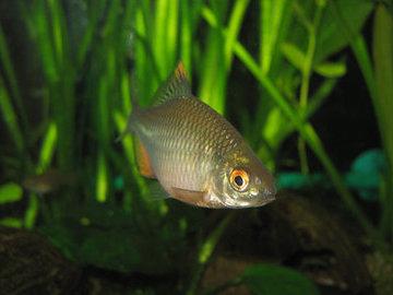 Рыба-симбиот