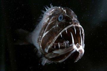 Необычные рыбы, о которых мало кто знает