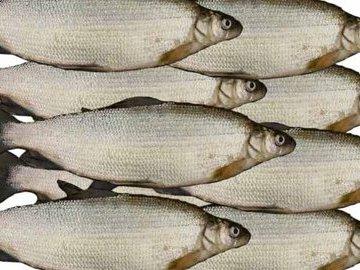 Очень осторожная рыба